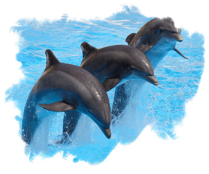 BEEnjoy Watching Jumping and Flipping Dolphins