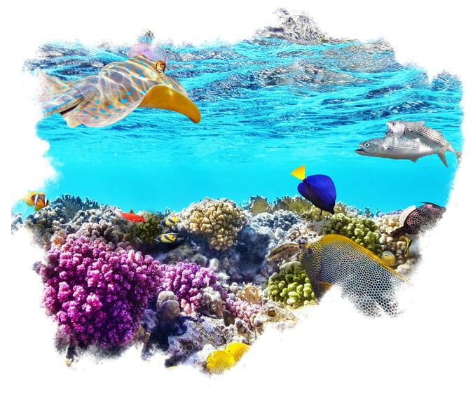 Rich Marine Biodiversity in Clearwater Beach, FL