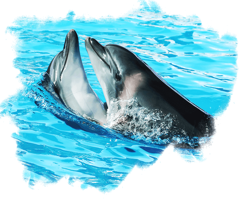 BEPeople Love Dolphins